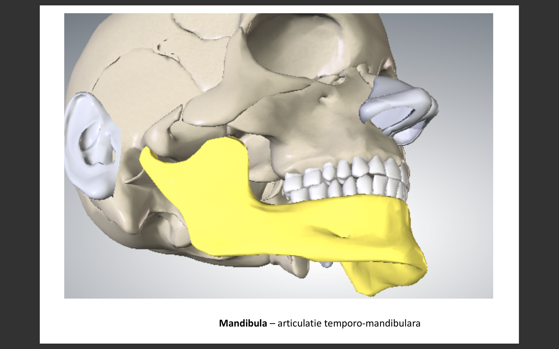 artrocenteza temporo mandibulara)